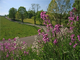 Free 2016 Roadsides in Bloom Calendar